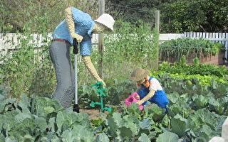 居家園藝必備哪些「神器」?