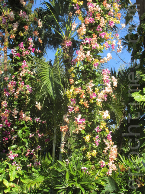 奥兰多的植物