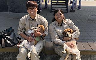 台湾两只红火蚁侦测犬登日秀本领 超吸睛