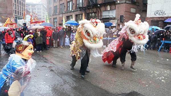 华埠传统舞狮迎春风雨助阵