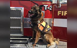 智利消防局为工作犬举办丧礼 队员列队向狗儿致意