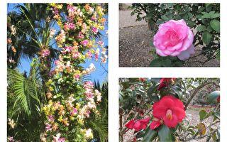 奥兰多丰富多样的植物