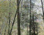 散落人间的文字:竹林深处有茶乡