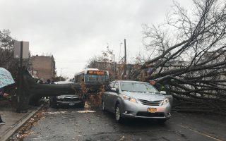 狂风袭纽约 多处大树倒万户停电