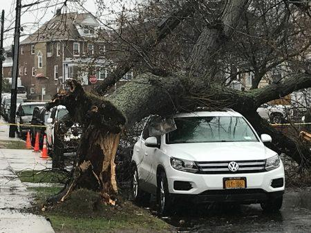 法拉盛155街夾三福大道附近,一棵大樹被狂風吹倒。