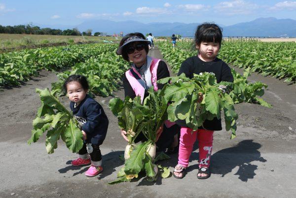 蘿蔔在唐代之前稱「萊菔」;蘿蔔的葉叫「菘菜」。(曾漢東/大紀元)
