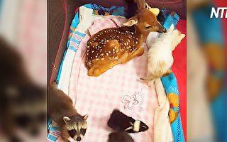 動物園新生寶寶大聚會 可愛得像童話故事