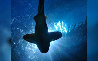 他潛水探望相識7年的海底朋友 牠「咧嘴」開心和他自拍