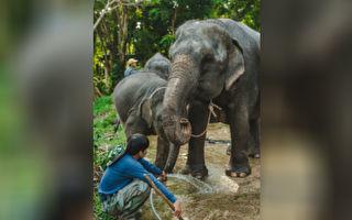 小象跌落深井嗷嗷叫 他們趕走母象做了件難以置信的事