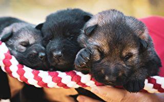 三隻小狗黏在焦油上動彈不得,生命垂危之際,他們出現了…