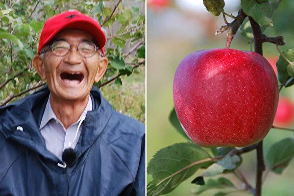 日本傳奇人物木村秋則用有機無農藥全天然栽培法種出不腐爛的蘋果。(臉書截圖)