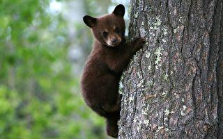 """小熊如此黏人 可爱模样让人好想""""抱紧处理"""""""