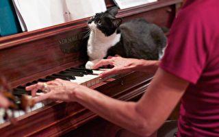 80歲老嫗街邊彈鋼琴 她的琴聲震驚所有人