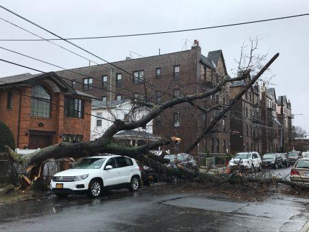 法拉盛155街大樹倒下砸斷電纜,造成住戶斷電。