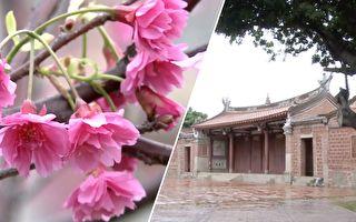 山中赏樱太费力?这里的樱花又多又美 还有古迹相伴