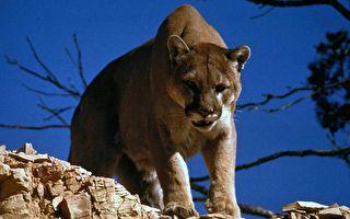 遊國家公園竟被獅子盯上 兩男驚險走脫