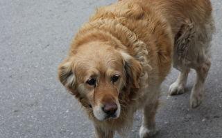 老狗因主人去世悲傷過度久面壁 直到洞察牠心思的人出現