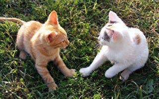 雙胞胎小貓緊緊相擁而眠 粉嫩模樣讓人直呼:超療癒啊!