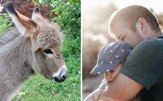 BABY碰到BABY驢 會發生什麼好玩的事情