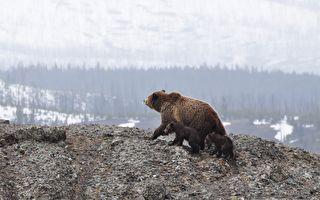 森林小路上遇到3隻毛茸茸的熊 他怎能這般淡定?