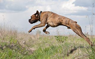 狗狗訓練有素 狂奔後一躍而起 接下來的動作 讓人直呼太驚豔了!