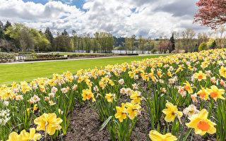 春来了冬不走  加拿大各地春季天气预览