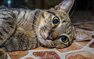 俄羅斯流浪貓救棄嬰 爆紅成英雄