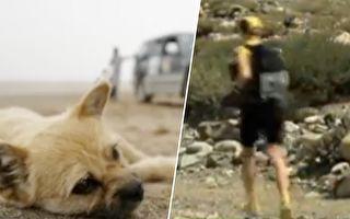 挑战戈壁 路遇流浪狗 没想到它竟一路伴随 狂奔125公里