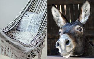 世上最好命的驢寶寶 懶在吊床上的表情太享受了