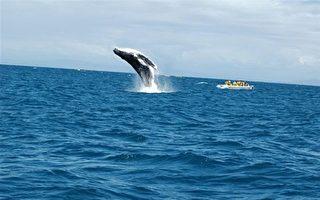 这家人在海上 居然遇到像狗狗一般的大鲸鱼