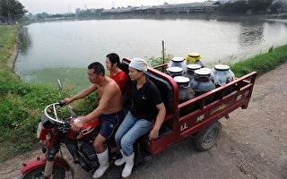 颜丹:新疆牛奶包装袋上印红歌意欲何为?