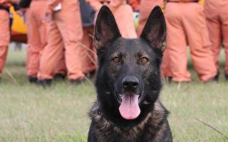 北市救難犬Ruby退役 寄養高雄安養天年