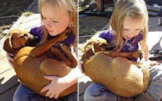 超暖!小女孩哼唱甜美摇篮曲 获救拉布拉多幼犬竟打起鼾