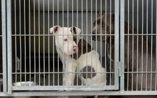 助養流浪動物 州府贊助收容所
