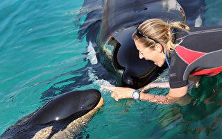 加国通过立法 将禁止圈养鲸鱼海豚