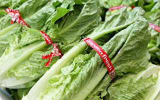 美CDC发出严重警告 勿食罗马生菜