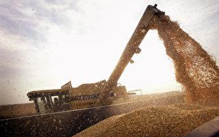 美中互祭关税 中共搬起大豆或砸到自己脚
