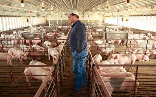 中共对美农产品增税 川普政府助农民有妙招