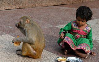 猴子偷走婴儿扔井里 印度警方追捕
