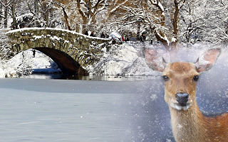 鹿陷冰湖 人們想揪住耳朵救牠 結果超暖心