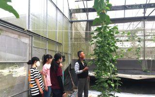 百香果栽种一举多得 提早上市又拉长采收期