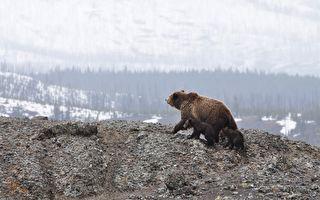 小熊整晚受困垃圾箱急坏母熊 村民巧计搭救获惊喜发现