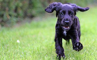 雙眼失明三年 手術後「首見」主人 狗狗反應好暖心