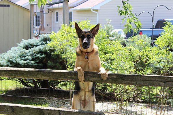 这样打理花园 宠物玩得开心又安全