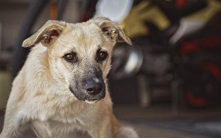 走失小犬嚇到躲進危險地帶 幸虧身上藏救星