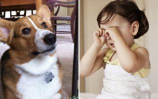 暖狗一個窩心舉動 成功安慰小女孩受傷心靈
