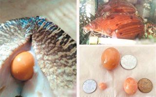福建老板买黄螺佐餐 切开惊见3颗美乐珠 价值逾千万