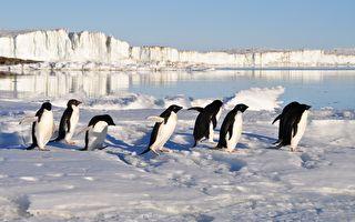 """卫星拍到危险群岛铺满""""芝麻粒"""" 南极企鹅数量翻一倍"""