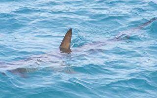 兩人海中嬉戲 鯊魚鰭在不遠處若隱若現 然後…
