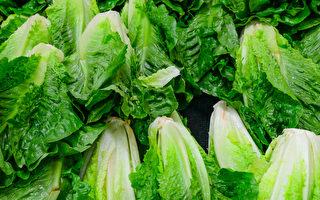 美國大腸桿菌疾病爆發 加拿大生菜無召回